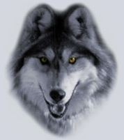 Picture of a Wolf - the History of Dogs